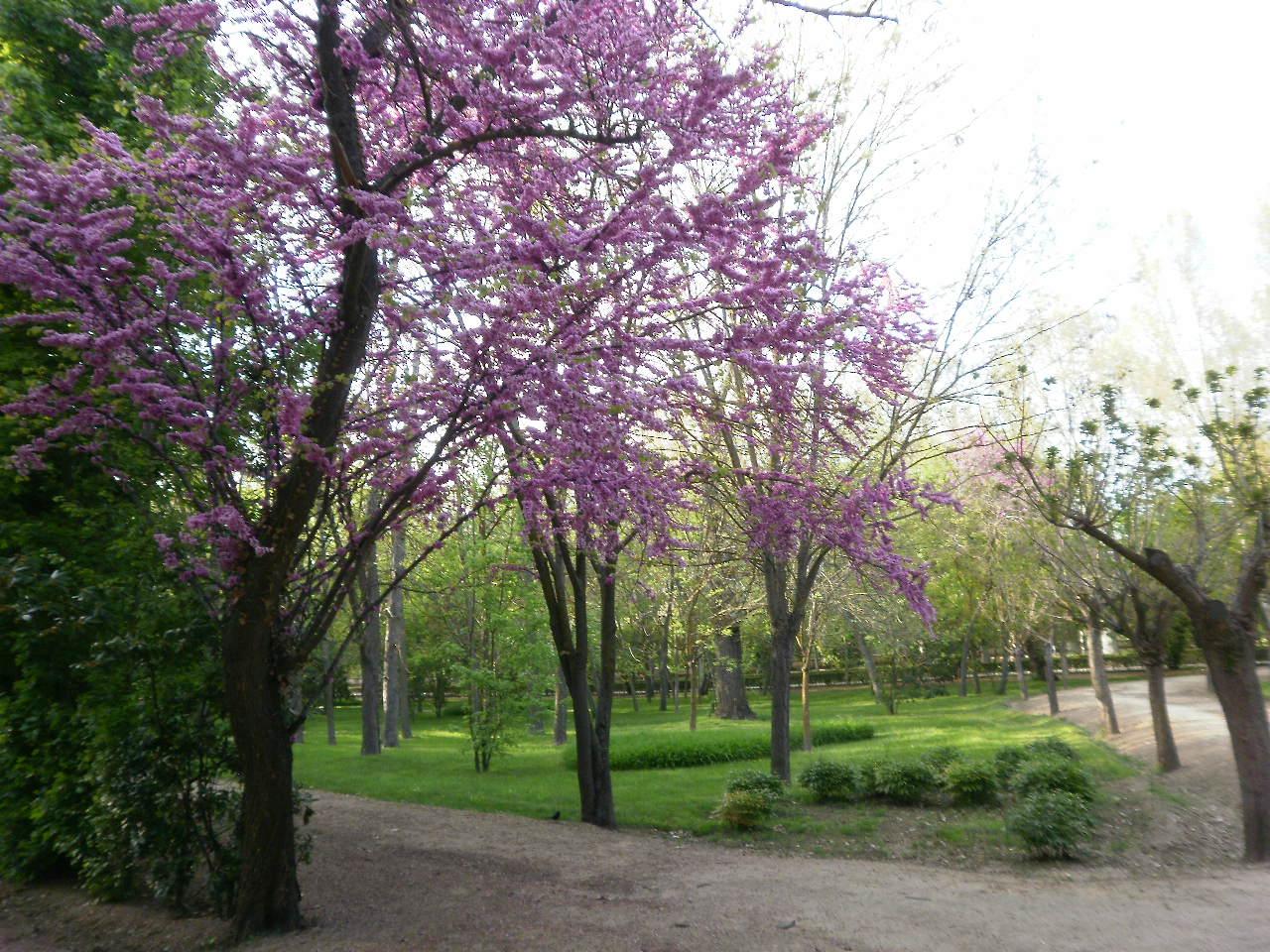 Arbol primavera imagui for Inmobiliaria 2b aranjuez