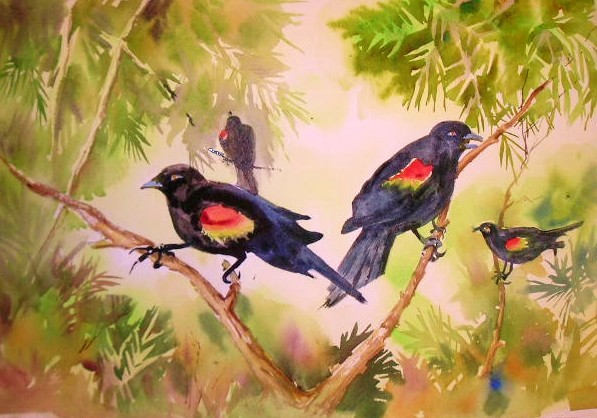 black birds with orange wings