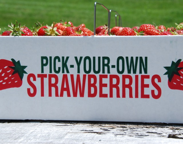 external image u-pick-strawberries.jpg