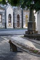 Cimetiere des Plaisirs, Lisbonne