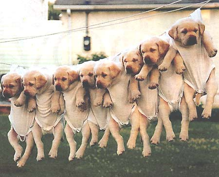 Not exactly a costume but very cute clothesline puppies & Dogs Wearing Costumes - Cute Pictures of Dogs in Costumes: Not ...