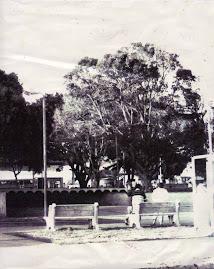 Parque de Tibás