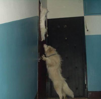 http://4.bp.blogspot.com/_NOXa1CXNsxg/SXWgvyVpLLI/AAAAAAAAEAI/7u1dTil_y70/s400/Cat+in+Danger.jpg