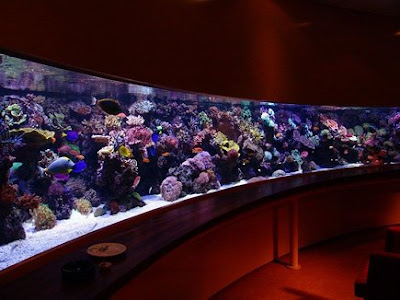... SETUP: Starting a saltwater aquarium (Saltwater aquarium setup