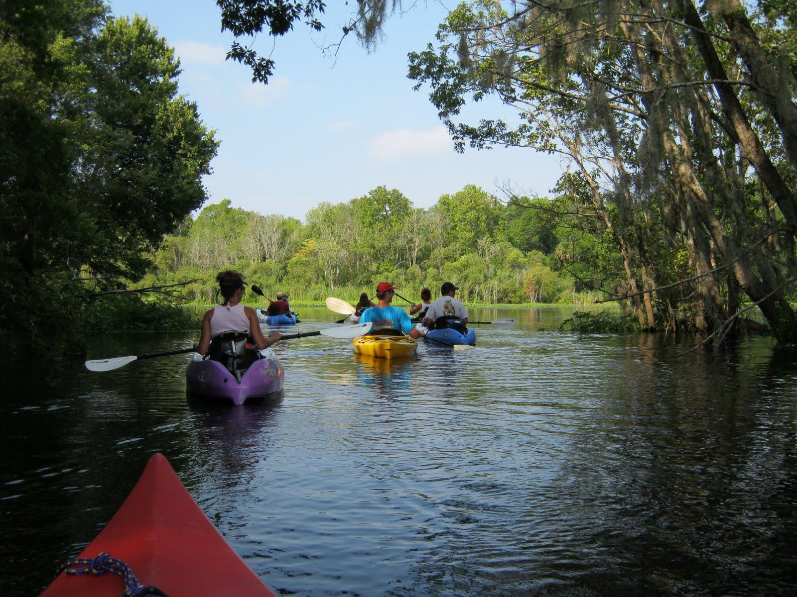 Wekiva River Monkeys Paddled The Wekiva River