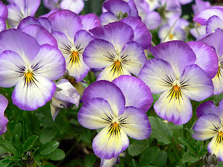 Flowers in bloom, purple flowers