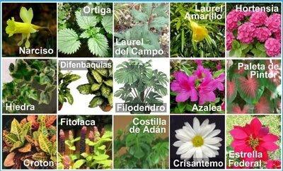 Algunos ejemplos de plantas venenosas.