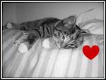 Litet hjärta
