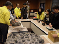 博物館スタッフの説明を受けながら巨大なアンモナイトの化石や石をさわって楽しむ