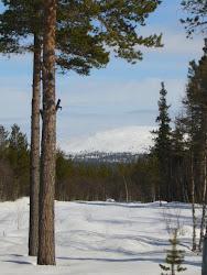 Utsikt fra hytta 08. (Sølen)