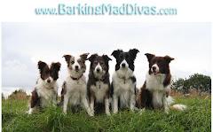 Barking Mad Divas