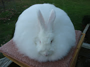 Specializing in the Beautiful French Angora