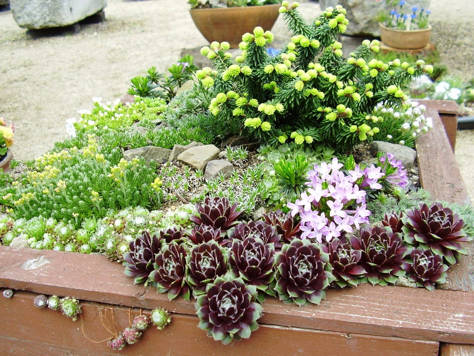 Gardenless gardener rock garden ideas for Rockery designs for small gardens