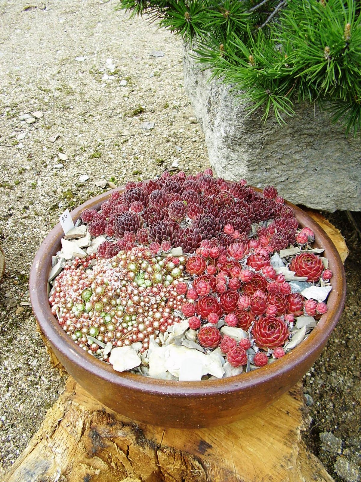 Small rock garden ideas photograph with little space let y for Small rock garden designs