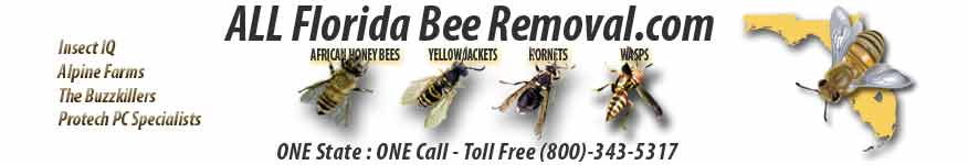 ALL Florida Bee Removal Blog