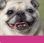 cepillo dental, cepillar diente perro
