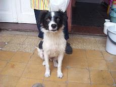 Doddy en adopción