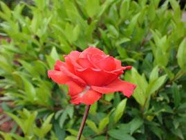 "Alejandra Pizarnik <a href=""http://soloveorosas.blogspot.com/"">Sólo veo rosas</a>"