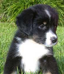 Cute Puppy Pics