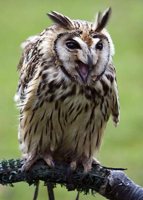 Owls Photo