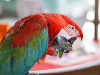 Parrot Colorful Bird Wallpaper