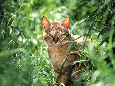 Animals Wallpaper - Cats Wallpapers