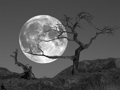 Moon night - Shaupmeyer tree  full moon Wallpaper