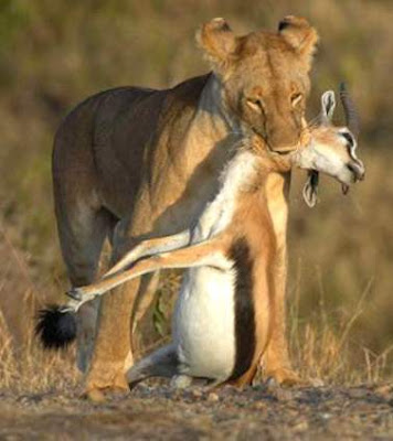 Animals Zoo Park Lion Deer Hunting Pics Hunting Photos