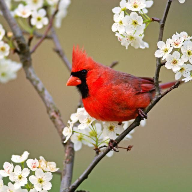 kumpulan gambar burung-burung cantik