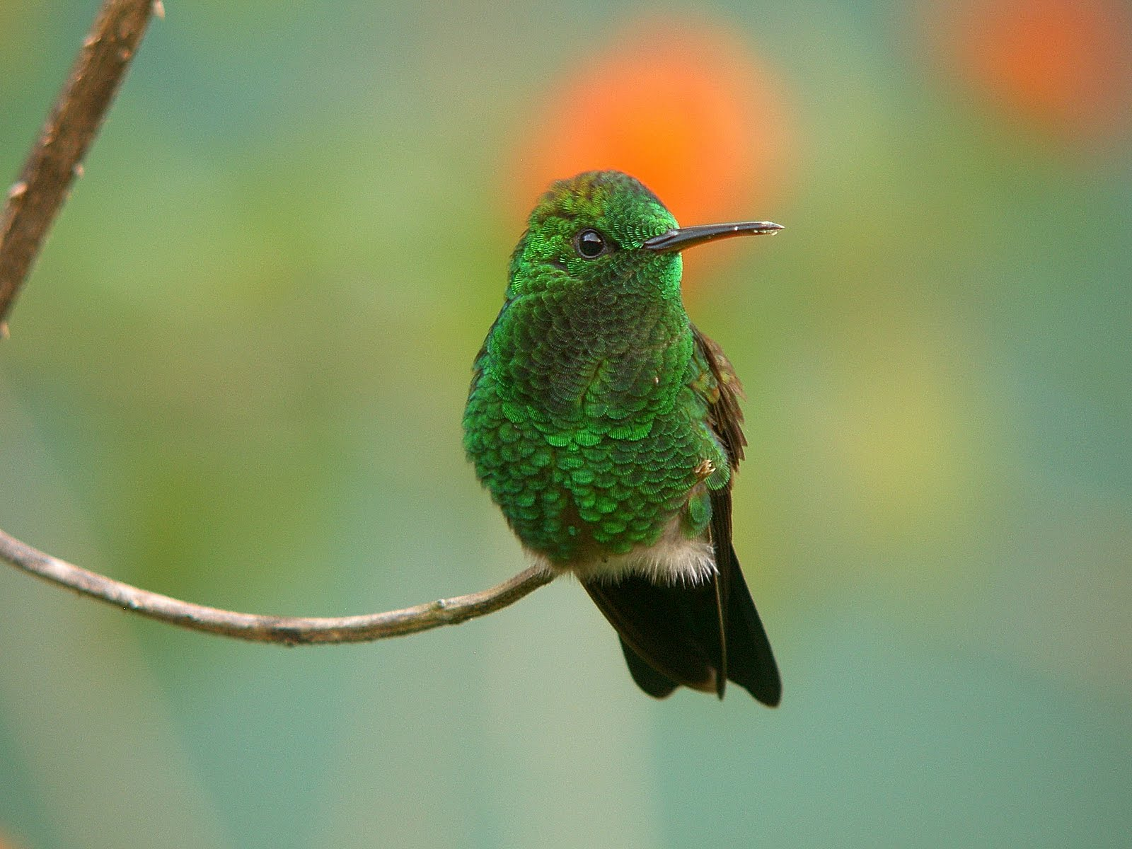 Unique animals blogs hummingbirds pictures hummingbirds Pictures of birds
