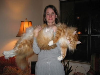 Worlds Biggest Cat Picture