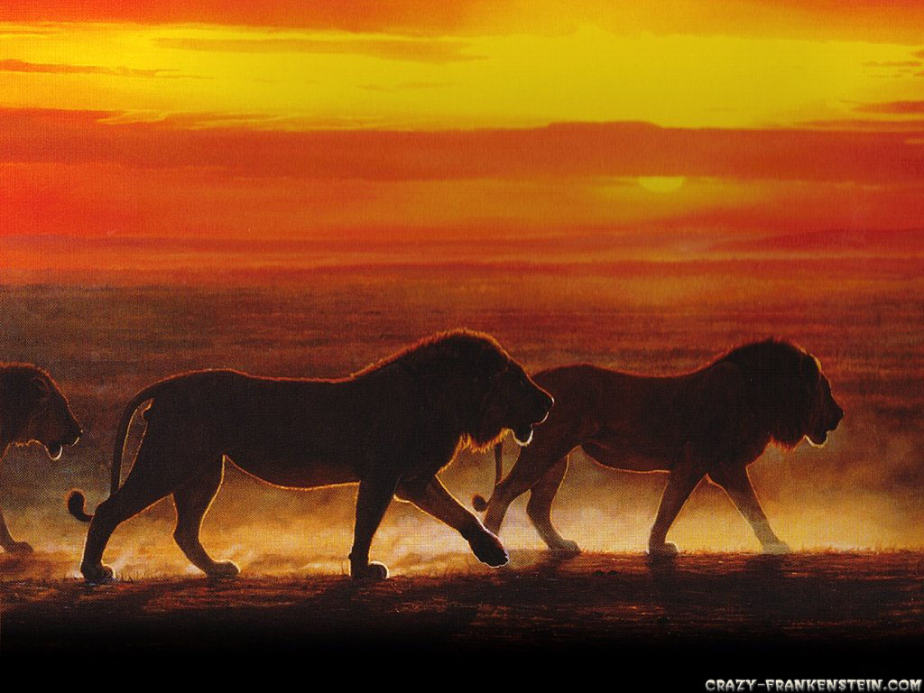 http://4.bp.blogspot.com/_N_mOB63qPaE/TODc4Bupy6I/AAAAAAAAQ2g/UpVGsgas3LY/s1600/group-of-lion-sunset-animal-wallpapers-1024x768.jpg