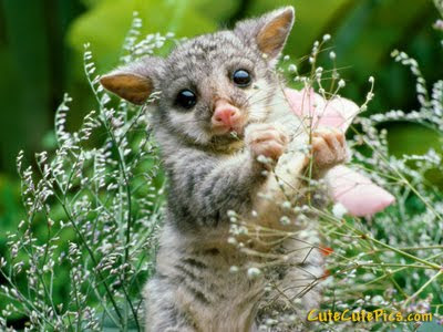 Cute Baby Animal Pics