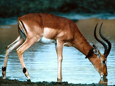 Animals Photos - Deer Photo