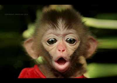 Cute Animal Monkey Photo