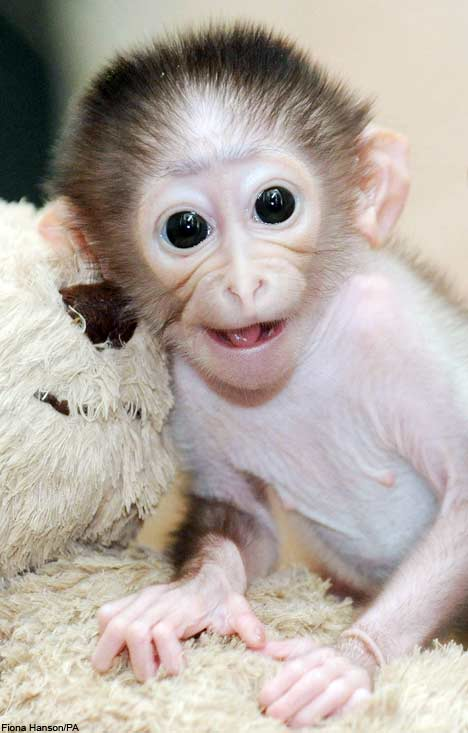 Animals Zoo Park: Smiling Monkey Pictures, Baby Monkey ...