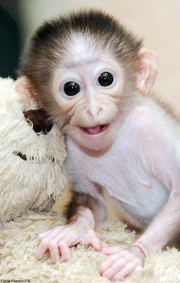 Baby Monkey Smiling Pics