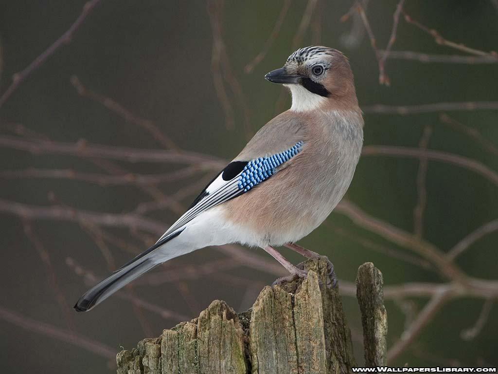http://4.bp.blogspot.com/_N_mOB63qPaE/TUCTYLBRhiI/AAAAAAAASDk/-RyFgwbKe5Q/s1600/bird-wallpaper-1.jpg