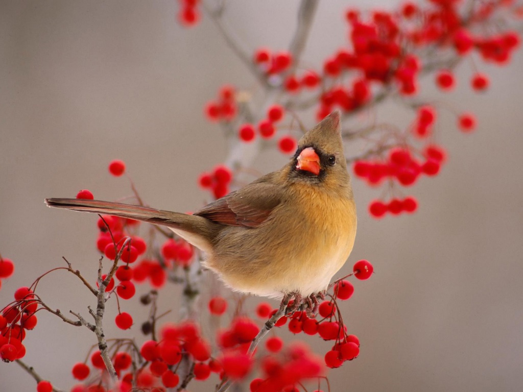 Birds Desktop Wallpapers, Bird Beautiful Wallpaper