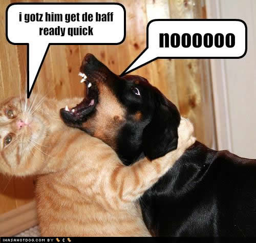 http://4.bp.blogspot.com/_NaS05hOjdXQ/TRDAwuibFQI/AAAAAAAABHw/0TjjEj5czkc/s1600/funny-dog-pictures-baff-ready.jpg