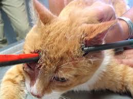 [Image: kucing4.jpg]