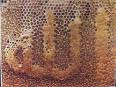 lebah berzikir kepada Allah swt
