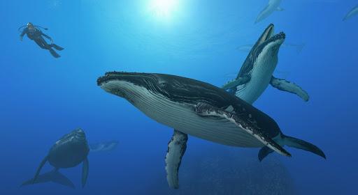 Whale Wars Wallpaper