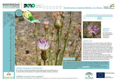Francisco cruz agricultura paisajismo c sped deportivo for Programacion jardin botanico