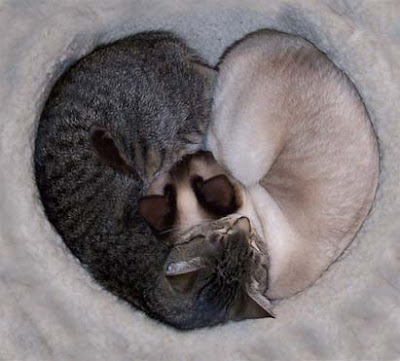 cats+in+love - Felines in love - Photos Unlimited