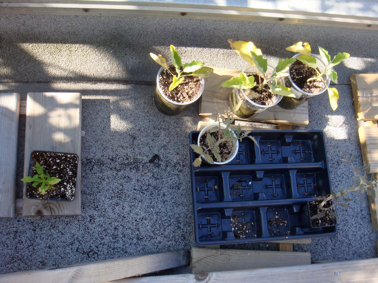 climbing plants essay