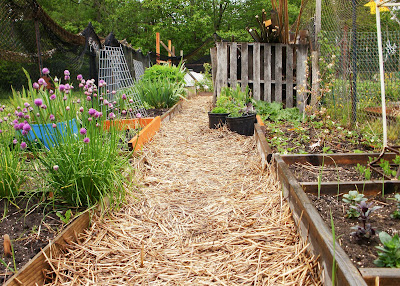 this garden - perennials