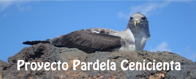 Proyecto Pardela Cenicienta