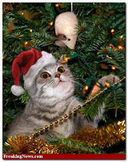 Cat Chat With Caren And Cody: CATS AND CHRISTMAS