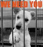 Save A Puppy, click below